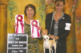 Tampa Bay Chihuahua Club 50th Specialty