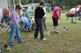 TBCC Puppy Match – October 2011