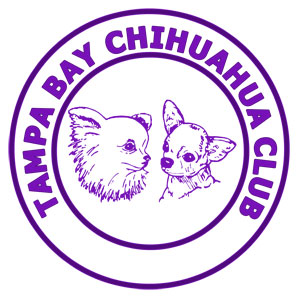 Tampa Bay Chihuahua Club Specialty