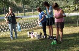 TBCC Puppy Match – November 2012