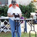 Tampa Bay Chihuahua Club Fun Match – November 2012