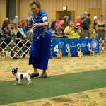Tampa Bay Chihuahua Club 54th Specialty