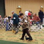 Tampa Bay Chihuahua Club 53rd Specialty
