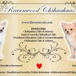 Debbie Robertson - Ravenwood Chihuahuas