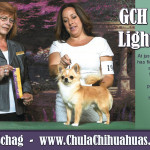 Gina Schag - Chula Chihuahuas