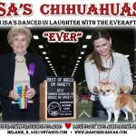 Melanie Bowling - ISA's Chihuahuas
