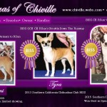 Jodi Thurman - Chihuahuas of Chiville