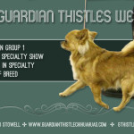 Alison Fackelman & Ken Stowell - Guardian Thistle Chihuahuas