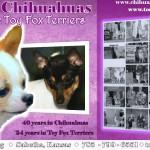 Sue Sunnenberg - Lavida Chihuahuas