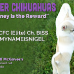 Shawna & Jeff McGovern - Meander Chihuahuas
