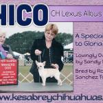 Sandy St. John - Kesabrey Chihuahuas