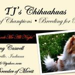 Tammy Caswell -TJ's Chihuahuas