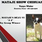 Tanya Wisler - Mataje Show Chihuahuas