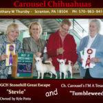 Bethany Thursby - Carousel Chihuahuas